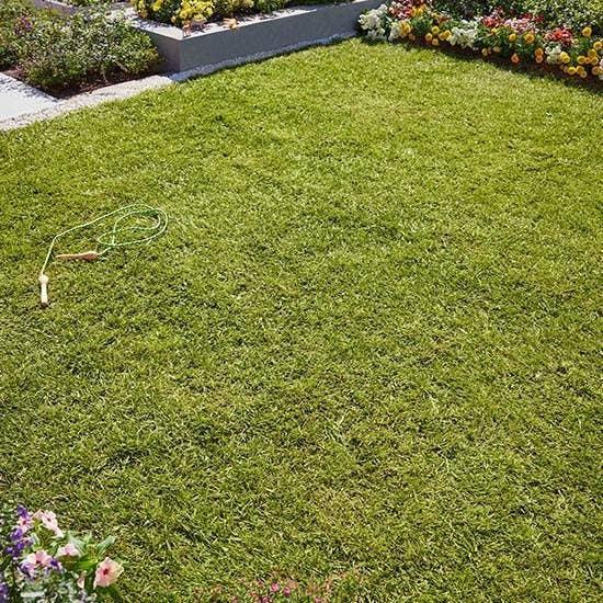 ce fel de tratament îmbină iarba