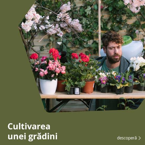 cultivarea unei gradini de legume