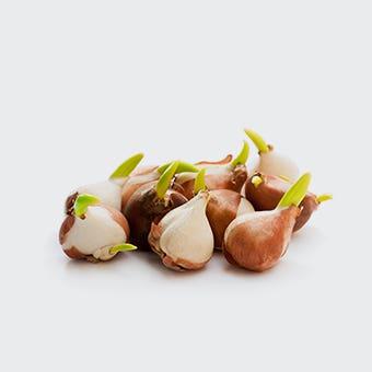 Semințe, bulbi și pământ