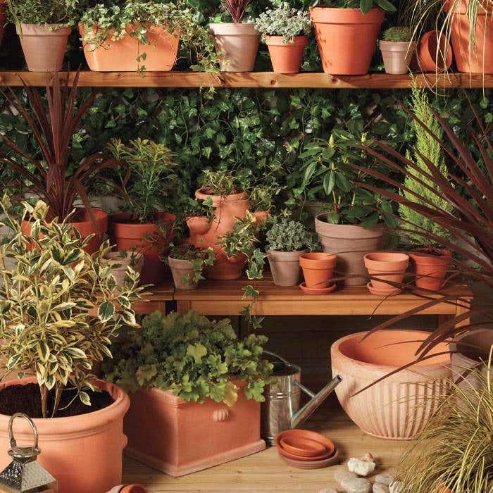 cultivare gradina 3
