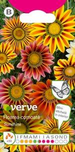 Amestec seminţe de floarea-comoară (gazania)