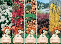 Arbusti ornamentali - diferite soiuri