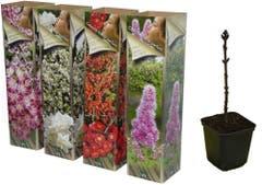 Colectia flori si parfum